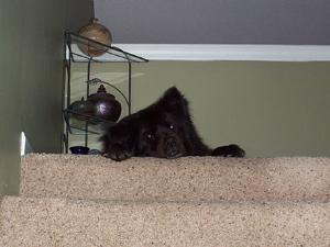 Nash - Best Dog Ever